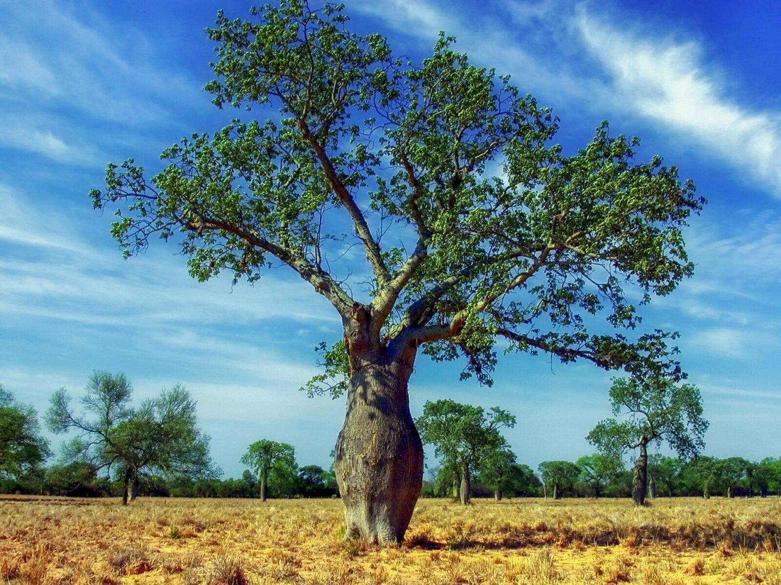 画像に alt 属性が指定されていません。ファイル名: ceiba-tree-321639_1920-1600x1199.jpg